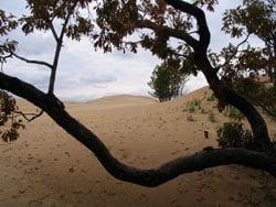 Michigan-Dunes